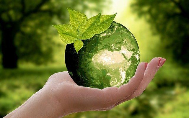 eko życie